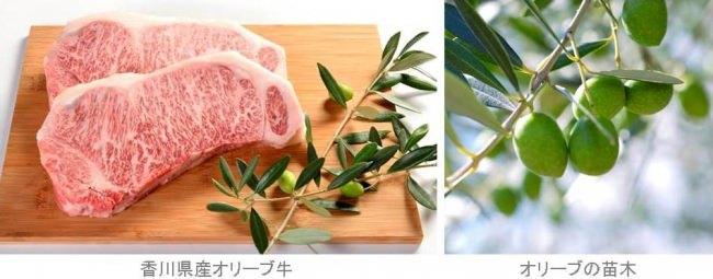 三菱地所グループの4ホテルにて黒毛和牛「オリーブ牛」を中心に香川県産食材を使用した「香川の味覚フェア」を展開