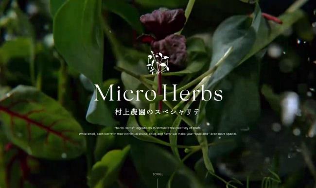 発売から1年5ヶ月で売上580%超。市場拡大中の新野菜「マイクロハーブ」のスペシャルサイトをフルリニューアル