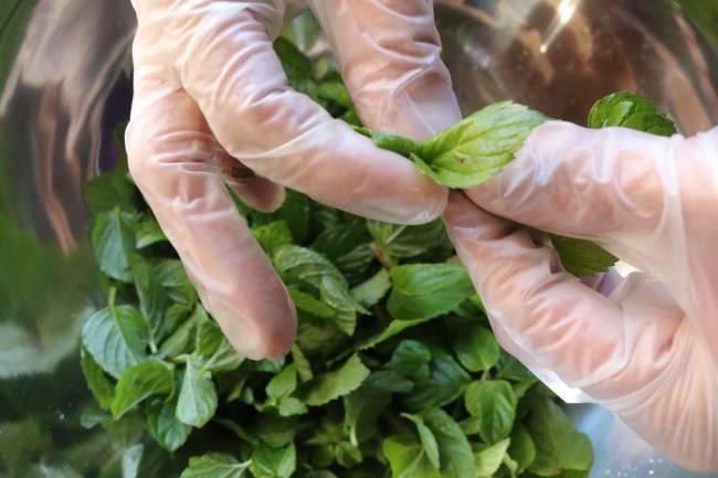 1回の仕込みに使用したミントは約30kg。1枚1枚葉だけを摘み取って使用。