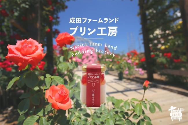 成田の観光農園が食用バラを使った「バラ薫るプリン」を6月20日(土)より期間限定で発売