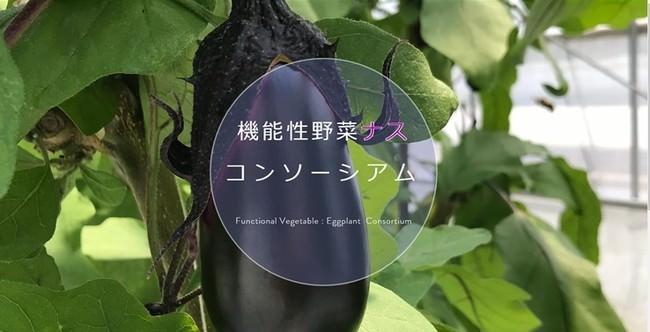 ナスを主役に!機能性野菜ナスの普及促進を目的とした「機能性野菜ナスコンソーシアム」を設立