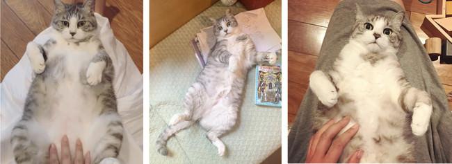 坂本美雨さんの愛猫「サバ美」#ズサァ