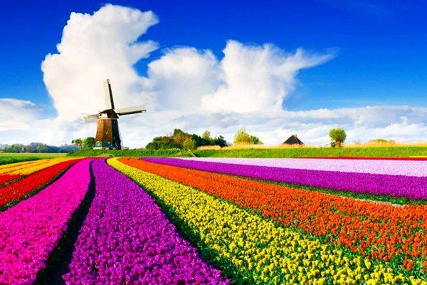 Tulpenblüte - Amsterdam Holland