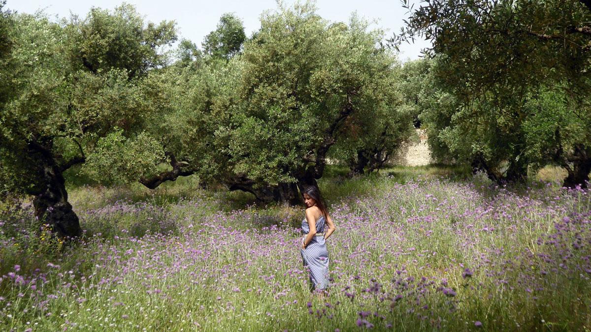 Olivenhain auf Zakynthos. Foto IH