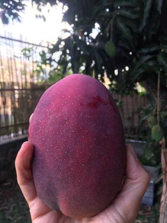 éducation alimentaire plaisir fruit local raison