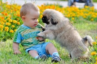boy-and-dog-1