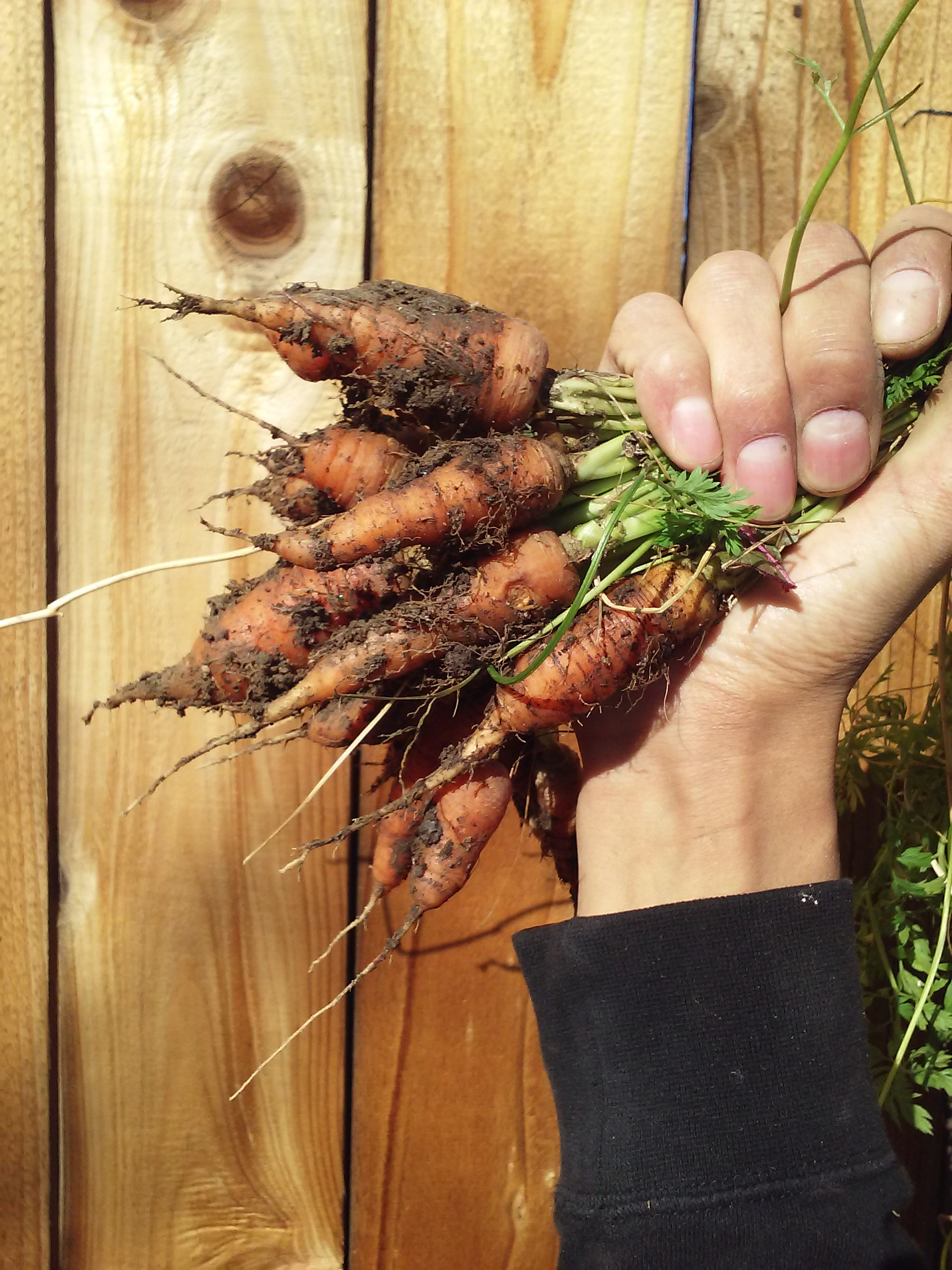 Featured Food: Carrots