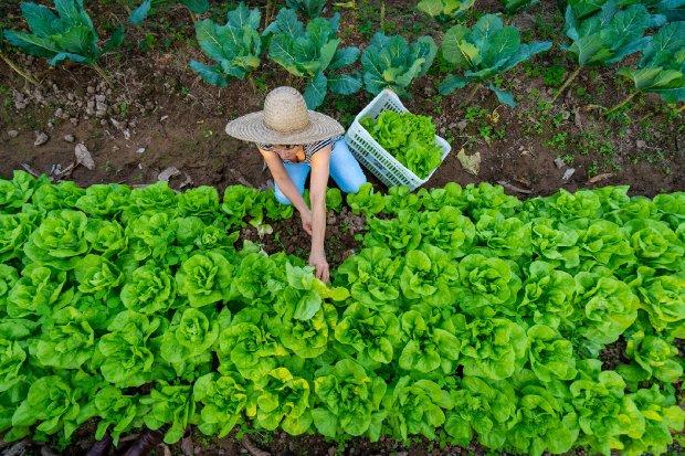Governo do Estado de Santa Catarina investe na compra de produtos da agricultura familiar