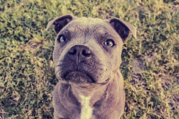 Katera pasma psa je najprimernejša za vaše horoskopsko znamenje ?