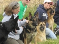 How to Choose a Dog Breeder (3/3)