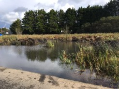cleared-pond