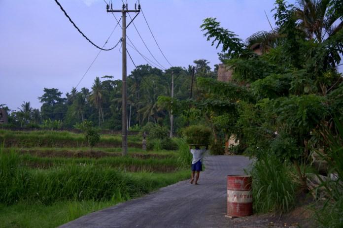 Indonezja.NEF-009