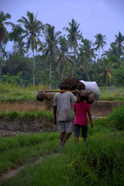 Indonezja.NEF-025