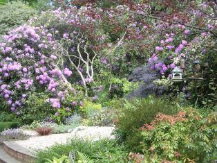 June North Avenue Garden