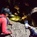 Meru Betiri, Kawasan Konservasi yang Jadi 'Rumah' Penyu Belimbing