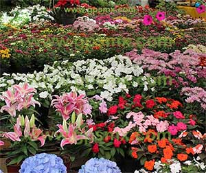flores jardines Composta Gpsmx