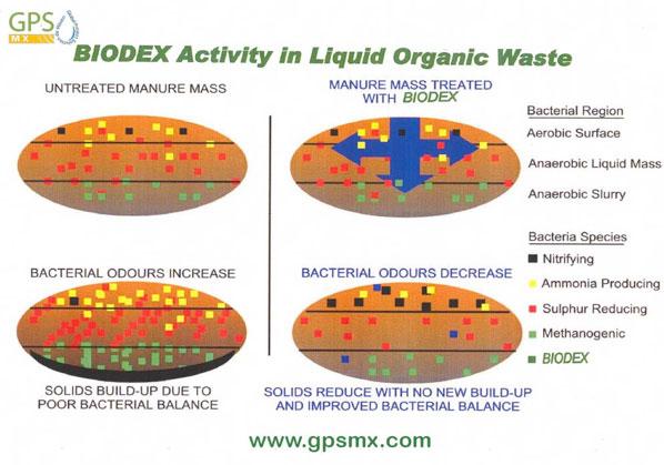 Cómo funciona Biodex Bioregulador bacteriano base Quelato de cobre