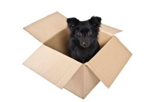 Kleiner schwarzer Hund im Karton