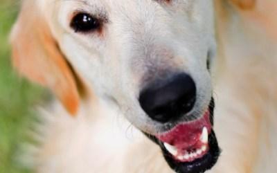 Funktionsweise eines GPS-Trackers für Haustiere