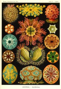 Ernst Haeckel 06