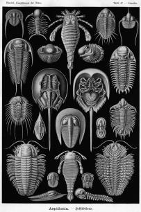 Ernst Haeckel 09