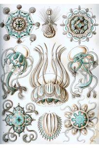 Ernst Haeckel 10