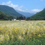 Уставни суд Косова потврдио имовинска права Манастира Високи Дечани – Саопштење Епархије рашко-призренске