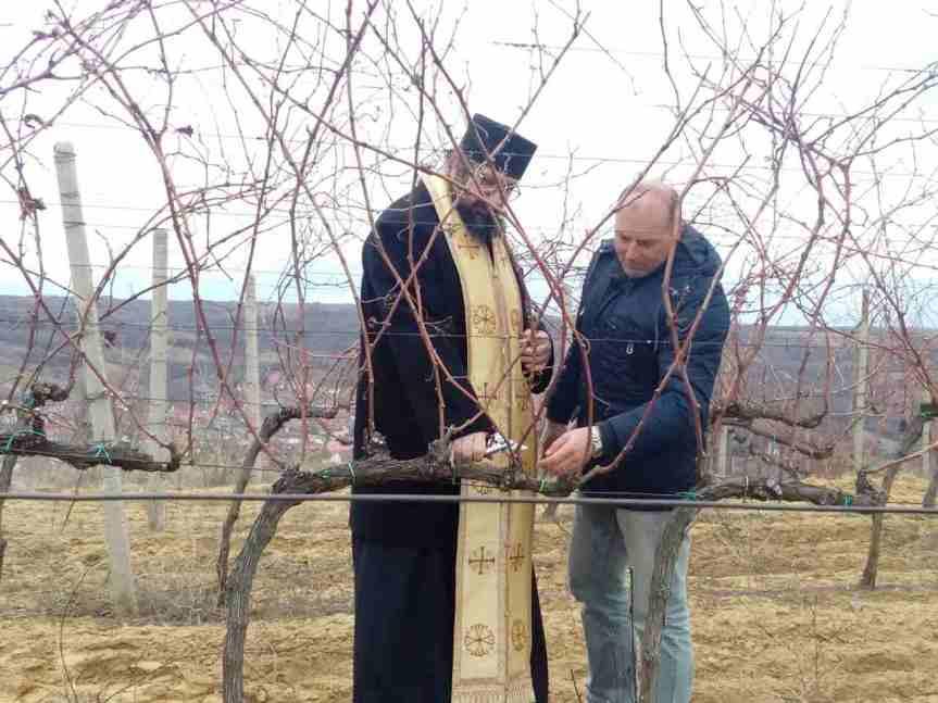 Виногорје Велике Хоче и Ораховца: резидба првих чокота за Трифундан