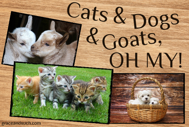 Cats & Dogs & Goats