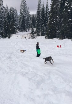Sledding with some canine pals