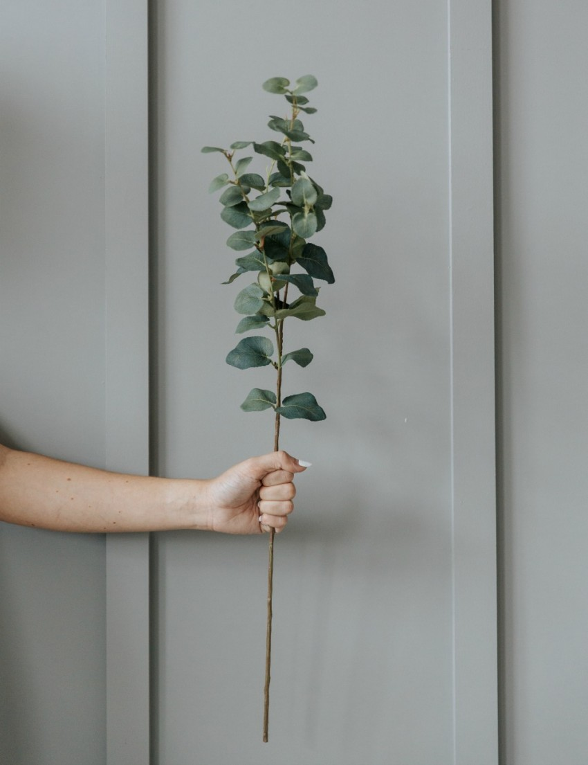 Rose and Grey Eucalyptus Sprig