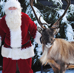Colchester Zoo Christmas event Essex with Santa & his reindeer