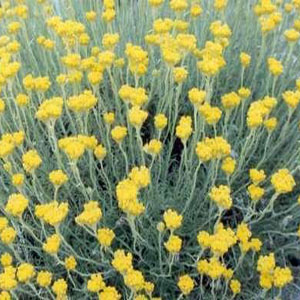 8 Kinds of Awesome