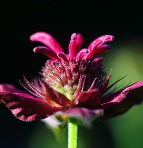 Nighttime Relaxing Diffuser Blend