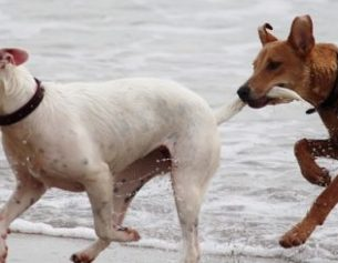 Animals & Essential Oils