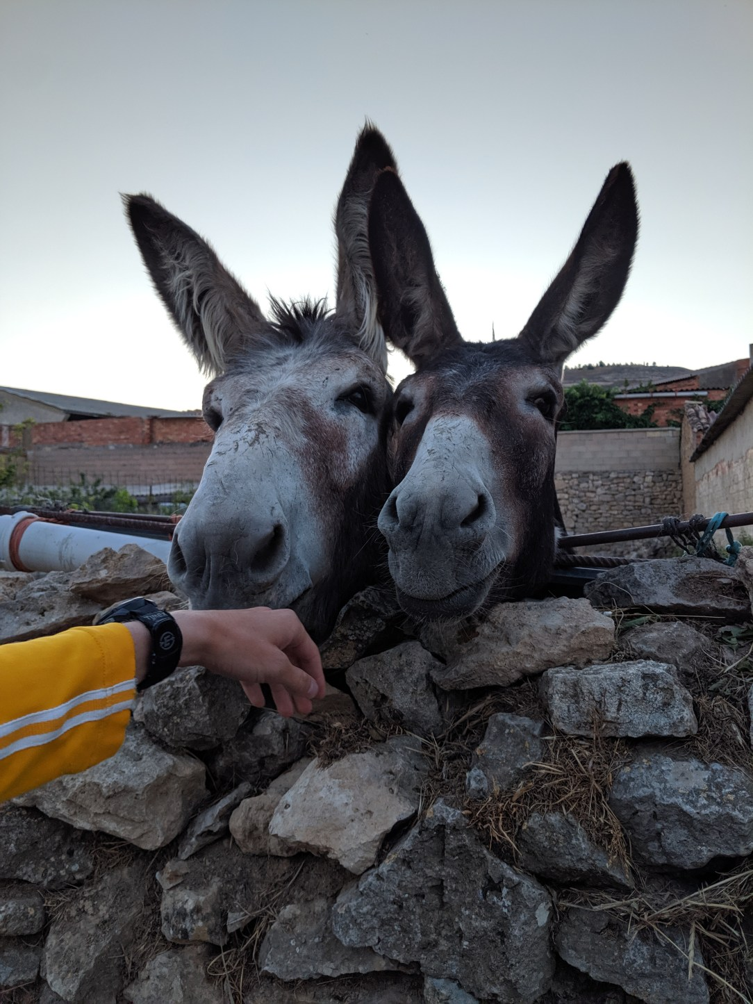 donkeys, Spanish wildlife, Spain travel guide