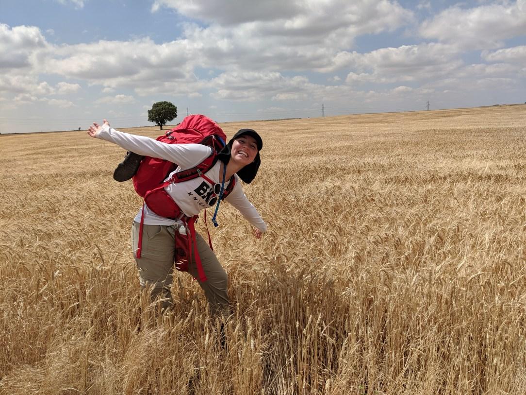 wheat fields, meseta, Camino, Spanish plains