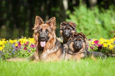 Dog Training the Spiritual Way