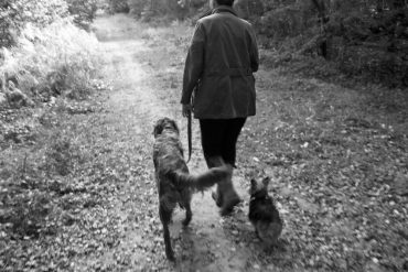 What is Spiritual Dog Training?