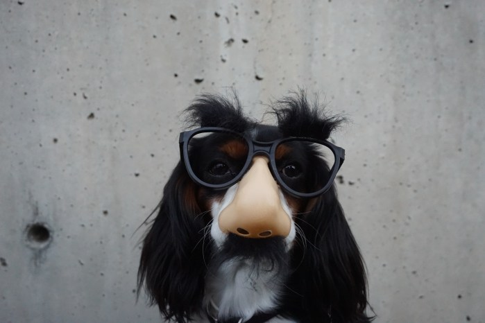 dog in glasses