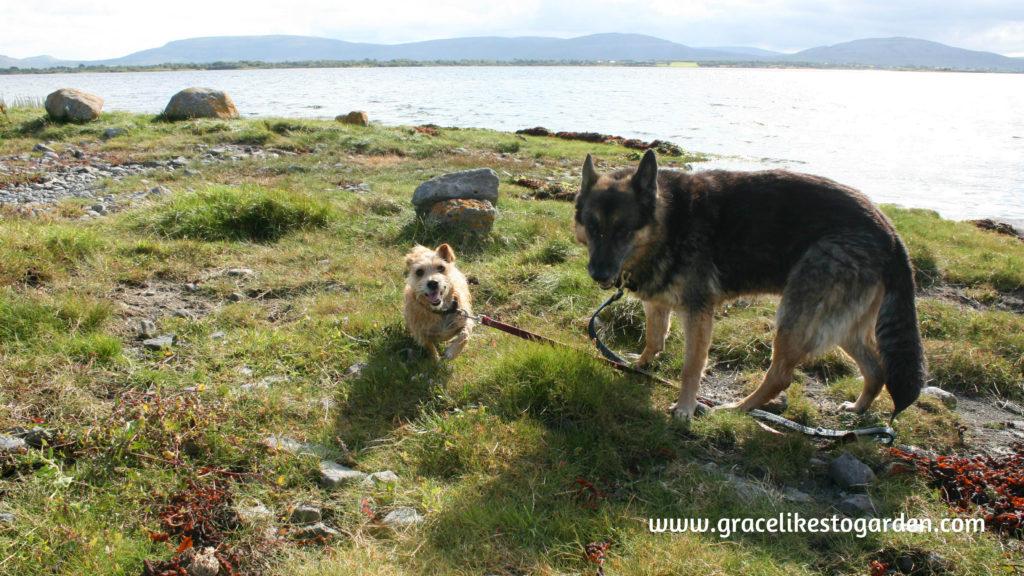 Sheba-and-Eppie-Island-EddieGG