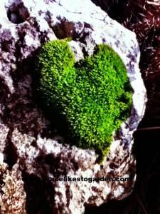 mossy-green-heart