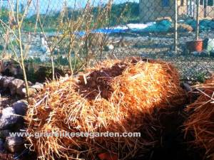 straw bale illustrating an article on straw bale gardening