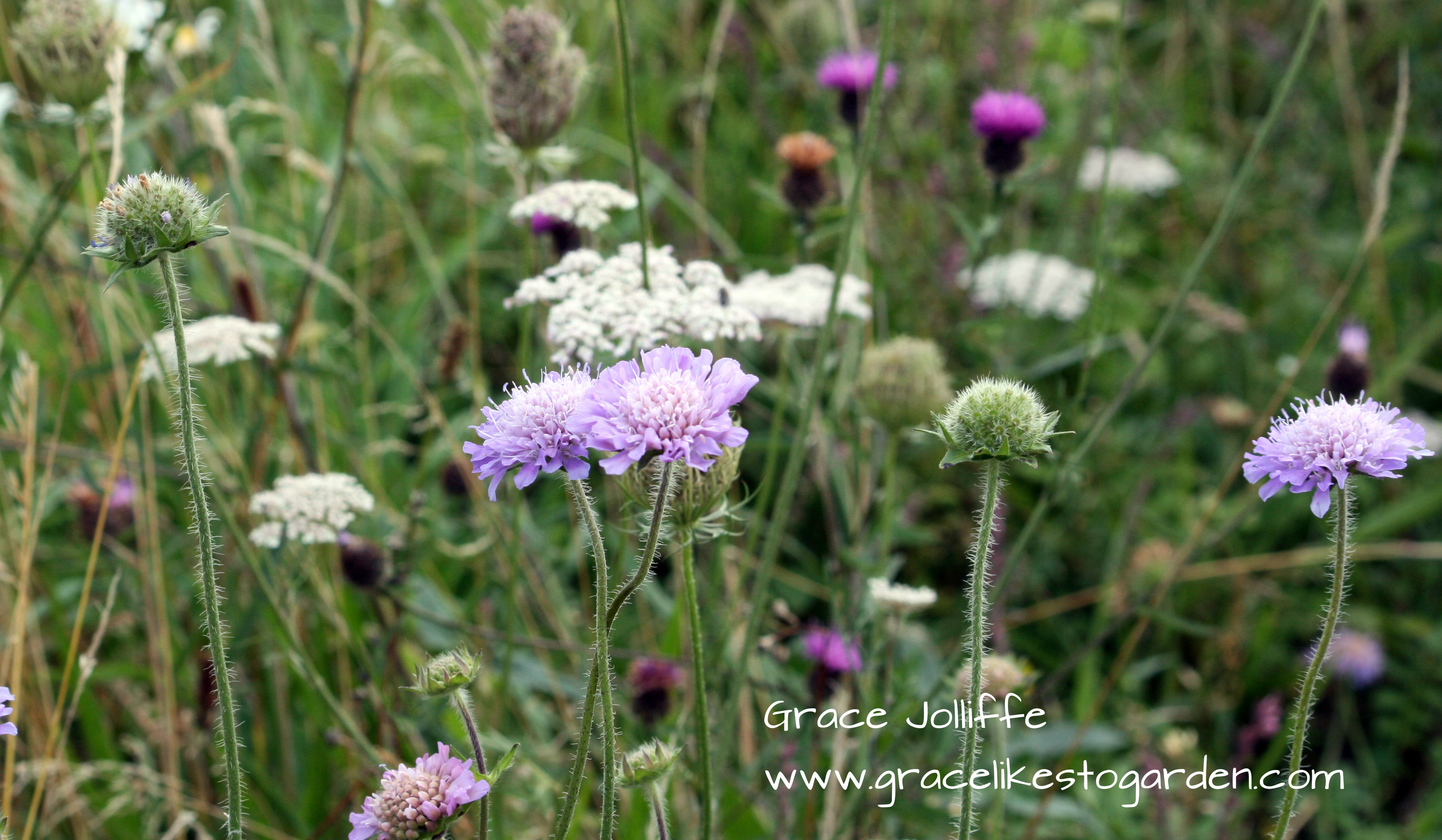 Flowers Of The Wild Atlantic Way Visit Graces Wild And Rocky Galway