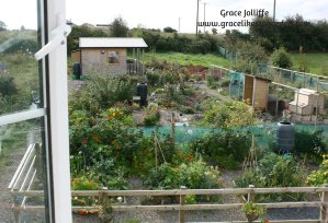 garden-and-hut