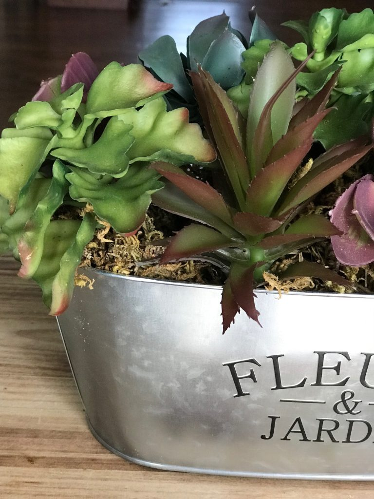 Cheap and Easy DIY Succulent Arrangement