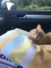Road trip with a kitten