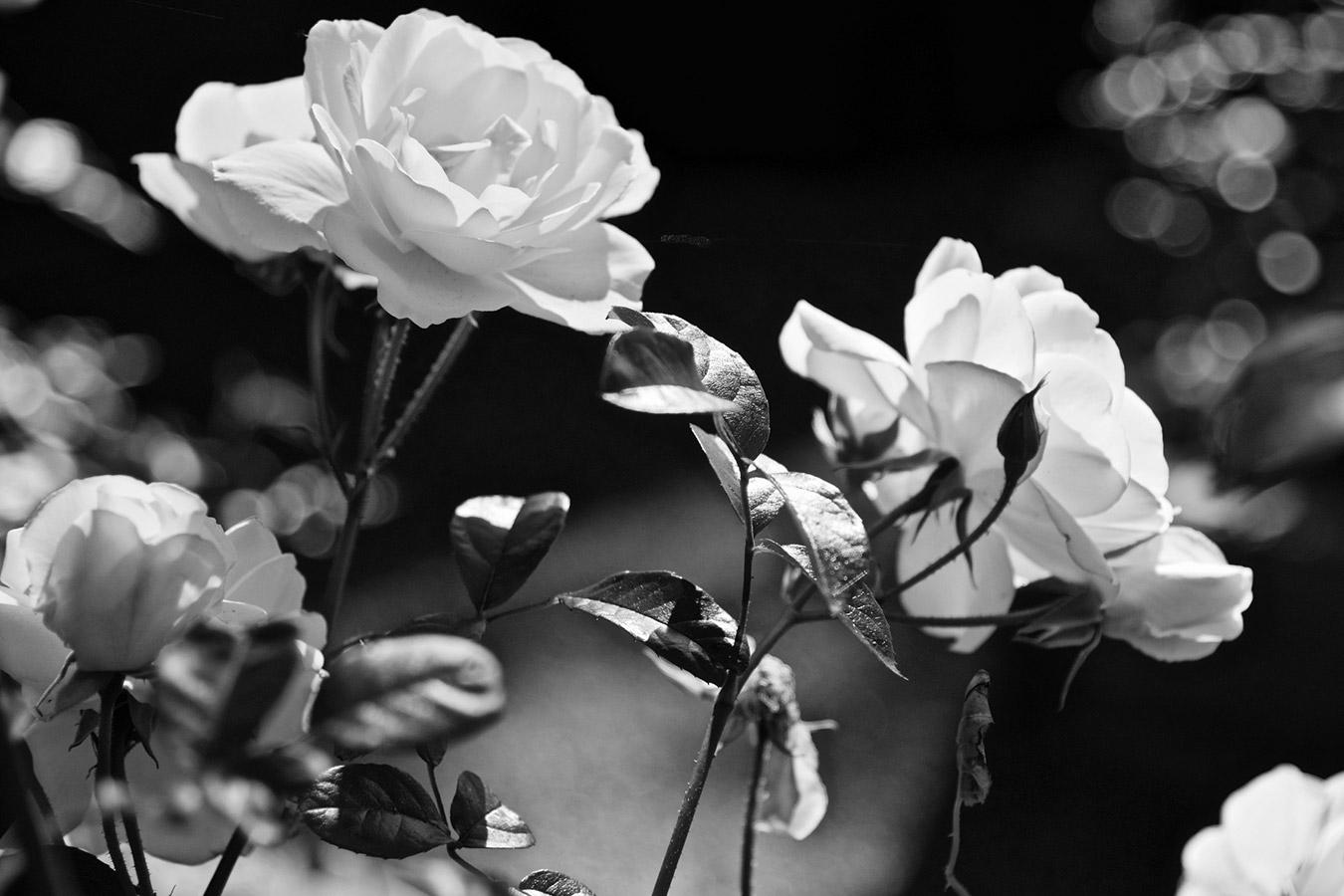 black white flower images