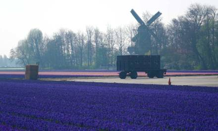 Tulip Season Holland – 7 Million Flower Bulbs Bloom In Spring