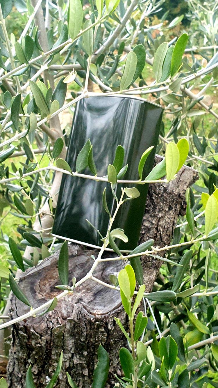 Fattoria Mansi Bernardini 2020 Olive Oil Tuscany Lucca